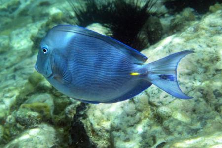 Grenadines Diving